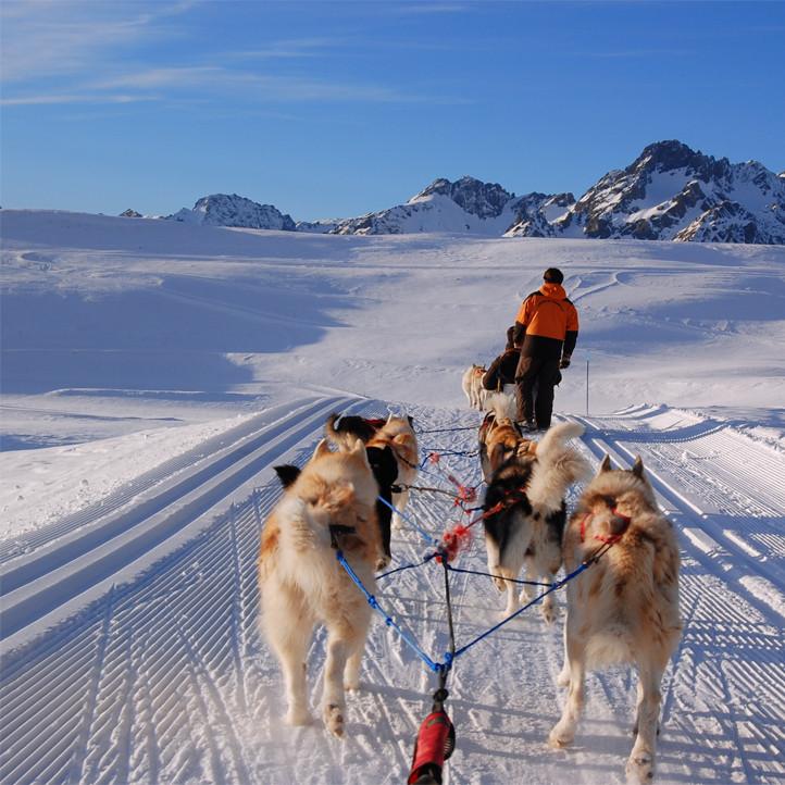 vacances neige savoie les karellis chiens de traineaux